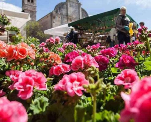 fešta od rožic flower market Svetvincenat Savicenta